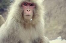 人をタイプに分けてコミュニケーションを円滑にする「類人猿セミナー」